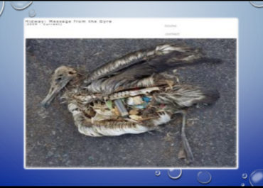 The Albatross sometime mistake plastic items in the Ocean to be food